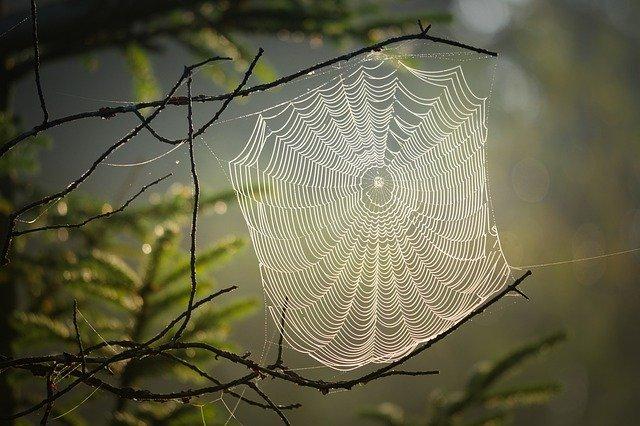 piqure araignée