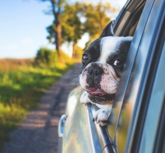 chien faisant un trajet en voiture