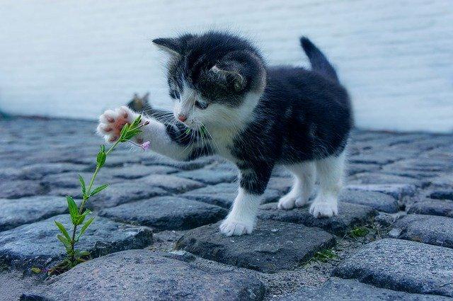 chaton qui joue dehors